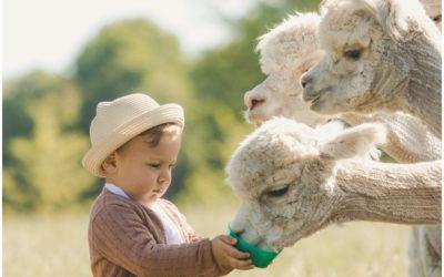 Fotoshooting mit Alpakas in Borken | Kinderfotos und Familienfotos